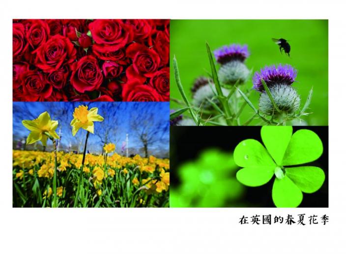 flowerig-01-01