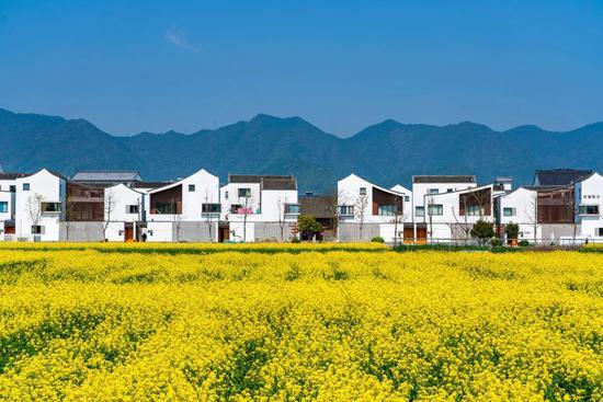 「露天泳池、花卉團簇」 浙江農村究竟有多富?