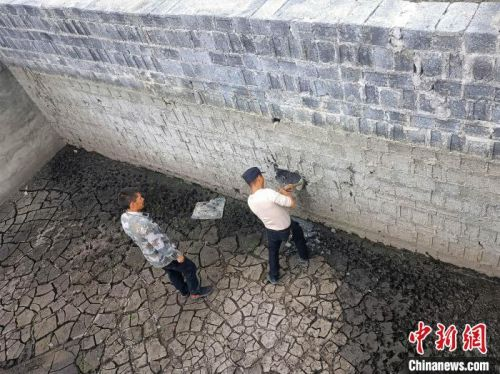 湖北五峰:野生毛冠鹿被困污水池 警民攜手救助